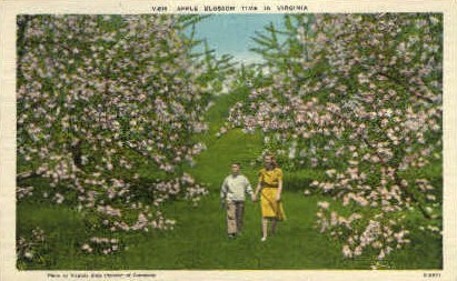 Apple Blossom Time in Virginia - Misc Postcard