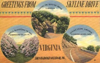 Apple Blossoms in Shenandoah Natl. Pk. - Misc, Virginia VA Postcard