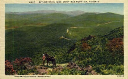 Skyline Dr. - Misc, Virginia VA Postcard