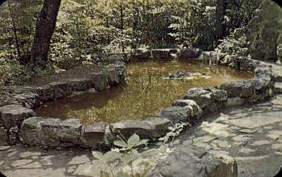 Lily Pool  - Orkney Springs, Virginia VA Postcard