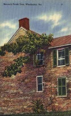 Natures Freak Tree - Winchester, Virginia VA Postcard