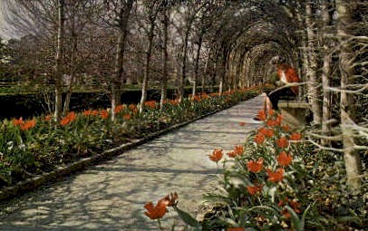 Tulips at Palace - Williamsburg, Virginia VA Postcard