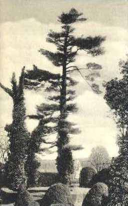 Ash Lawn, Home of James Monroe - Charlottesville, Virginia VA Postcard