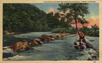 George Washington National Forest - Misc, Virginia VA Postcard