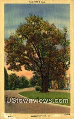Tarletons Oak - Charlottesville, Virginia VA Postcard