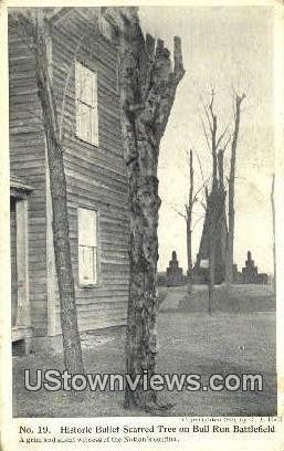 Historic Bullet Scarred Tree  - Bull Run, Virginia VA Postcard