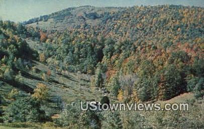 Mt Rogers State Park - Grayson County, Virginia VA Postcard