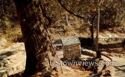 Arbor Vitae Tree - Misc, Virginia VA Postcard