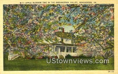 Apple Blossom Time  - Winchester, Virginia VA Postcard
