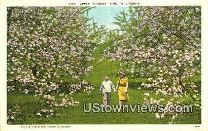 Apple Blossom Time  - Misc, Virginia VA Postcard
