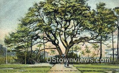 The Powhatan Live Oaks  - Norfolk, Virginia VA Postcard