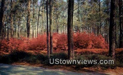 Azalea Gardens  - Norfolk, Virginia VA Postcard