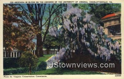 Wisteria at University Of Virginia  - Charlottesville Postcard
