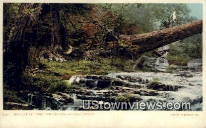 Arbor Vitae Trees And Cascade - Natural Bridge, Virginia VA Postcard