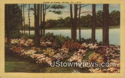 Garden Of Azaleas  - Norfolk, Virginia VA Postcard