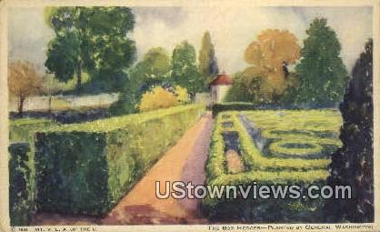 Planted by General Washington  - Mount Vernon, Virginia VA Postcard