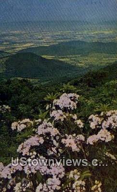 Mountain Laurel Banks  - Skyline Drive, Virginia VA Postcard
