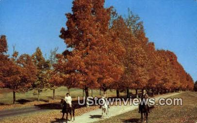 The Homestead Hotel  - Hot Springs, Virginia VA Postcard