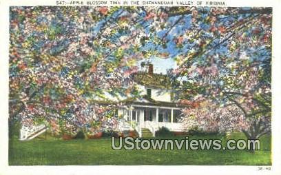 Apple Blossom Time  - Shenandoah Valley, Virginia VA Postcard