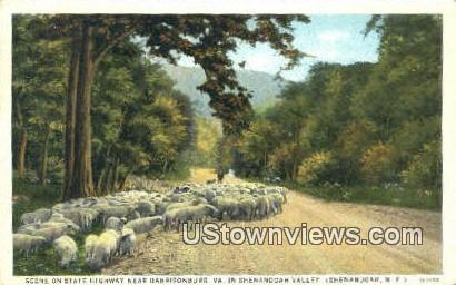 State Highway  - Shenandoah Valley, Virginia VA Postcard