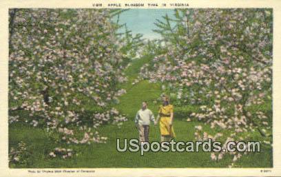 Apple Blossom - Misc, Virginia VA Postcard