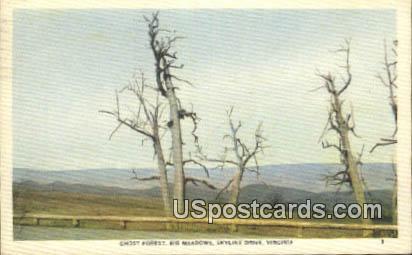 Ghost Forest, Big Meadows - Skyline Drive, Virginia VA Postcard