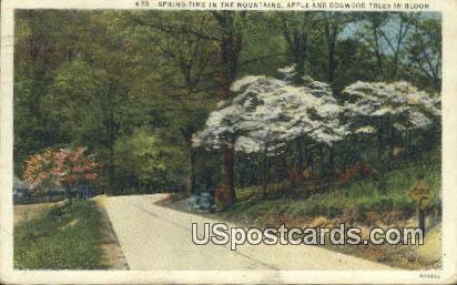 Apple & Dogwood Trees - Misc, Virginia VA Postcard