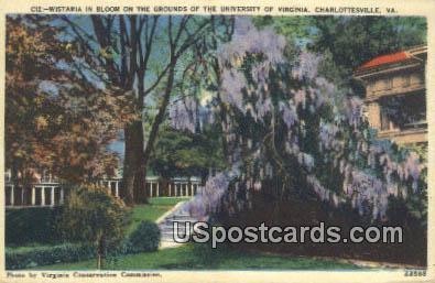 Wistaria, University of Virginia - Charlottesville Postcard