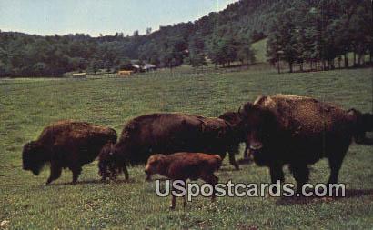 Circle M Zoo - Stuart, Virginia VA Postcard