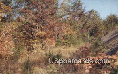 Section of the Wilderness Road - Cumberland Gap National Historical Park, Virginia VA Postcard