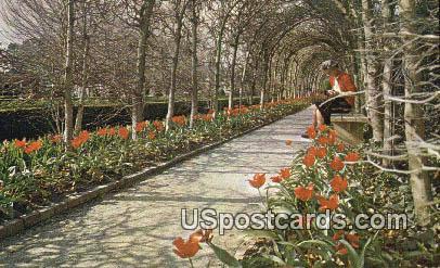 Tulips at Palace - Williamsburg, Virginia VA Postcard