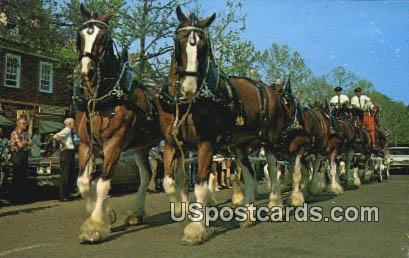 Anheuser Busch, Clydesdale - Williamsburg, Virginia VA Postcard