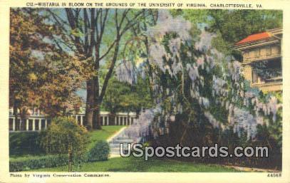 Witaria, University of Virginia - Charlottesville Postcard