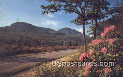 Purple, Red Catawaba Rhododendron - Blue Ridge Parkway, Virginia VA Postcard