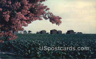 Bright Leaf Tobacco - Misc, Virginia VA Postcard