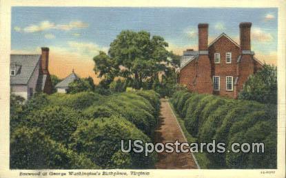 Boxwood at George Washington's Birthplace - Misc, Virginia VA Postcard
