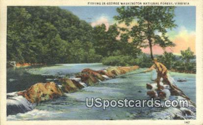 George Washington National Forest, VA Postcard       ;         George Washington National Forest, Vi - Virginia VA