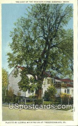 Last of the 13 Horse George Washington - Fredericksburg, Virginia VA Postcard