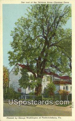 Chestnut Treets, George Washington - Fredericksburg, Virginia VA Postcard