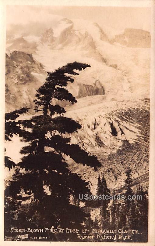 Storm Blown Firs at Edge of Nisqually Glacier - Rainier National Park, Virginia VA Postcard