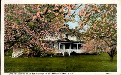 Apple Blossoms - Shenandoah Valley, Virginia VA Postcard