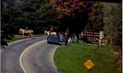 Riding Trail At Skyland - Shenandoah National Park, Virginia VA Postcard