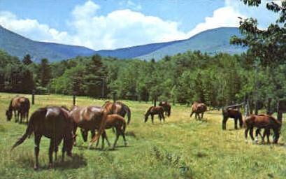Morgan's Bald Mountian Farm - Arlington, Vermont VT Postcard