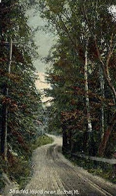 Shaded Wood - Bethel, Vermont VT Postcard