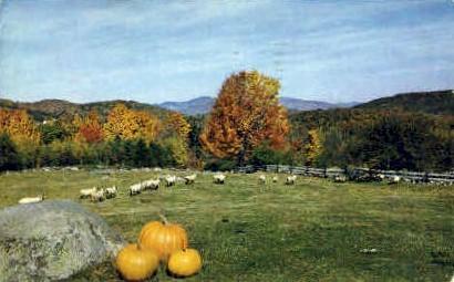 Sheep - Brandon, Vermont VT Postcard