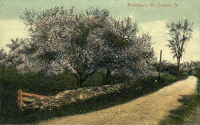 Orchard Street - Brattleboro, Vermont VT Postcard