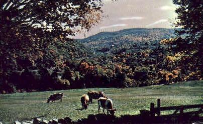 Chester Inn - Vermont VT Postcard