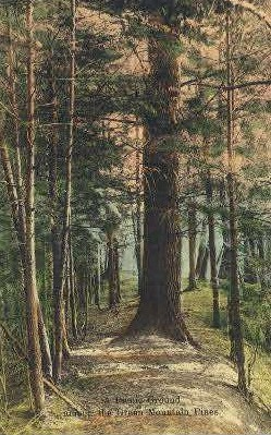 Picnic Ground - Green Mountains, Vermont VT Postcard