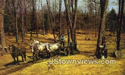 Vermont Sugar Orchard - East Central Vermont Postcards Postcard