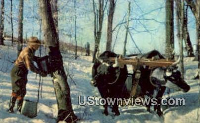Making Maple Syrup - Misc, Vermont VT Postcard